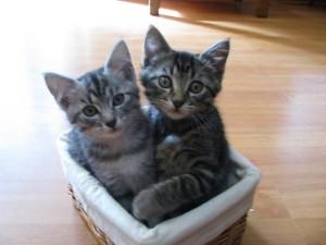 Bella and Tasha