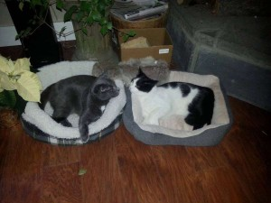 Rico and Sabrina in their new beds.