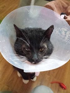 On the mend after receiving veterinary and foster care.